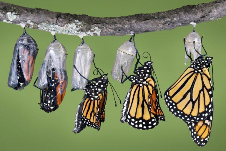 «Инаковение» бабочки