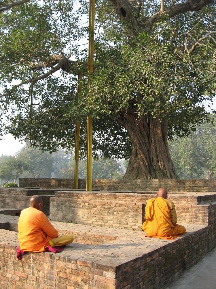 Буддийские монахи медитируют в монастыре Джетавана