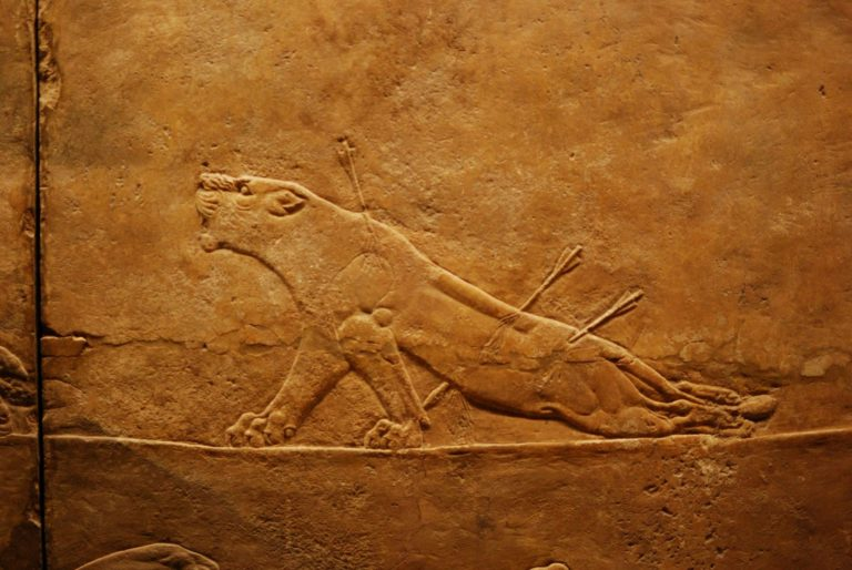 Умирающая львица