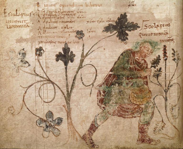 Асклепий (Эскулап) открывающий буковицу. XI век н.э.
