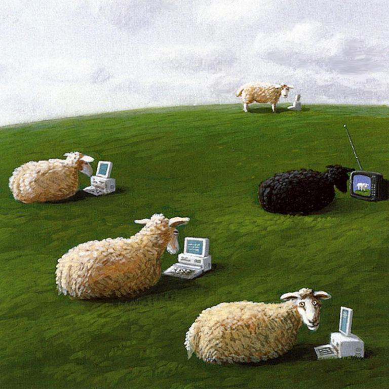 Овцы с ноутбуками