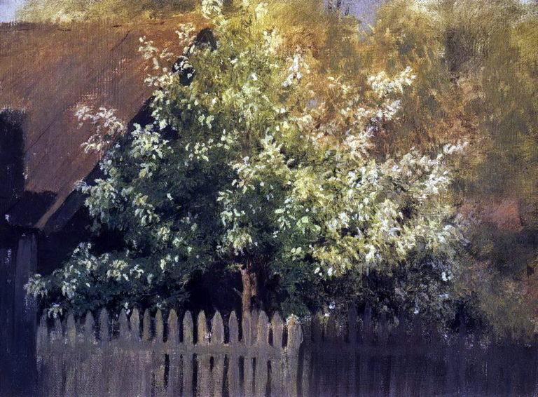 Черемуха. 1880
