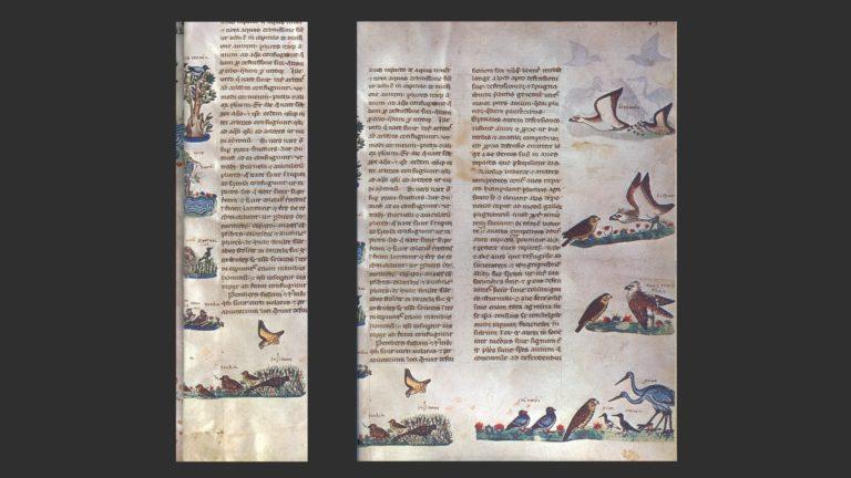 «Книга об искусстве соколиной охоты». XIII в.