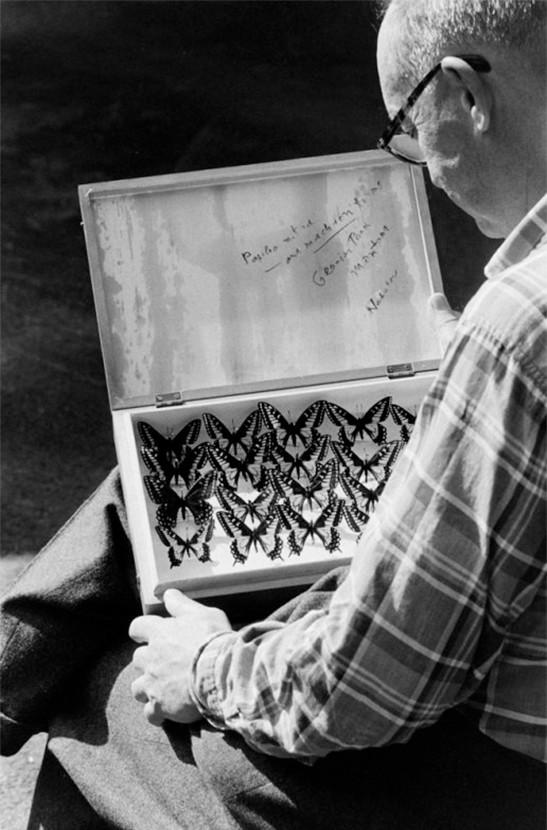 Владимир Набоков и его коллекция бабочек