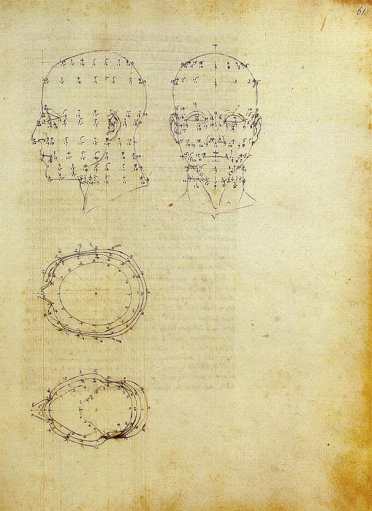 Проекции головы человека. 1474–1482