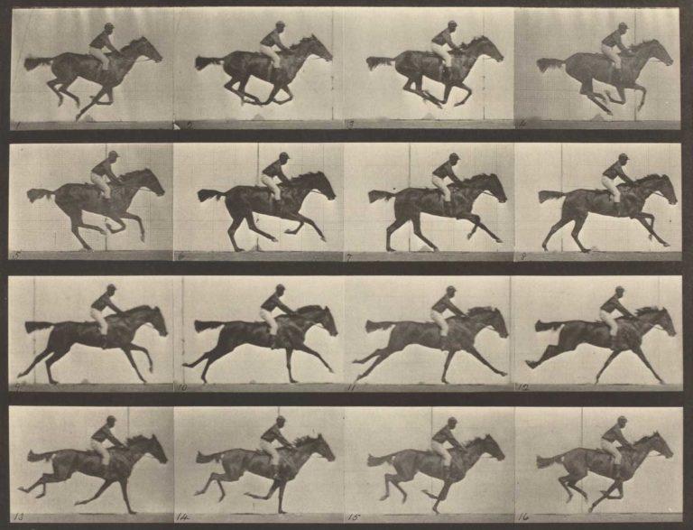 Лошадь в движении. Хронофотография. 1878